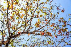 rama de árbol foto