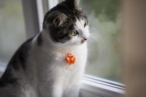 Cat with a ribbon photo