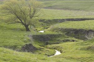 Rural Creek In Spring