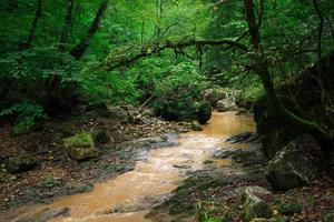 The mountain river in the woods near the North Caucasus