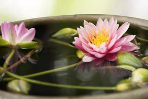 Vivid lotus over blurry background