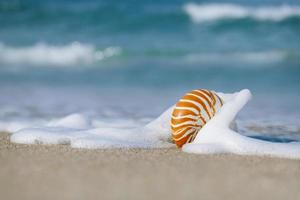 nautilus shell with sea wave,  Florida beach  under the sun