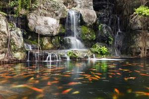 Peces koi en estanque en el jardín con cascada. foto