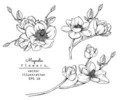 Magnolia flower drawings vector
