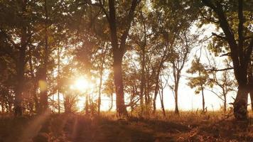 Autumn deciduous forest at dawn or sunrise video