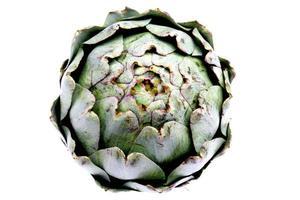 Large Green Globe Artichoke photo