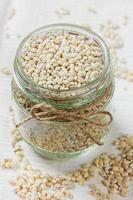 pearl barley in a bowl, selective focus
