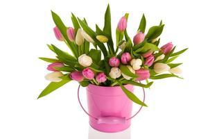 White tulips in pink bucket photo
