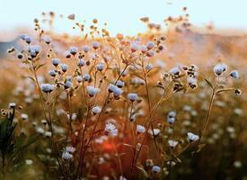 White petals flowers