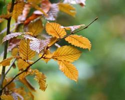Twig with leaves in autumn