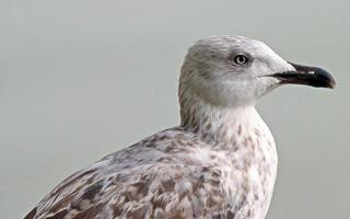 Close-up of a gull