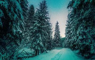 Alpine road among trees in winter