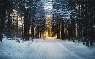 Winter landscape with road among trees