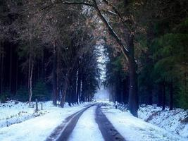 Road among forest trees in winter