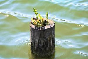 Plant growing on tree trunk in the water