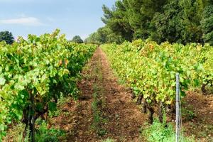 provecale vineyards