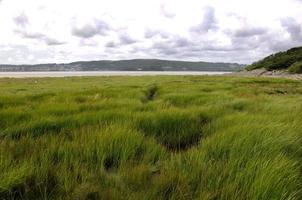 Sea Grass at Silverdale