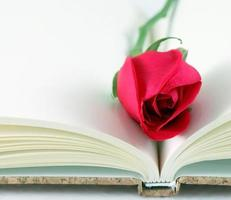 Red rose on a notebook. photo