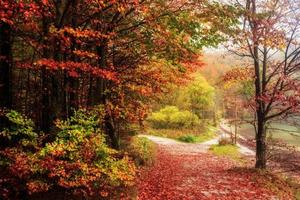 Lovely Autumn at the Sea of Kings