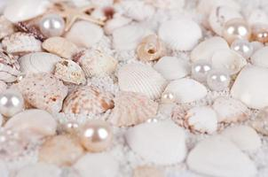background of sea shells and pearls photo