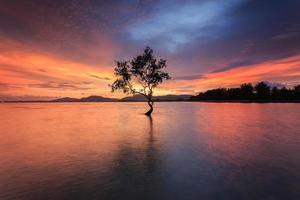 silueta de árbol en el mar en tiempo sutset