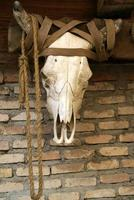Cow Skull hanging on Brick Wall