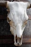 Tierischen Schädel
