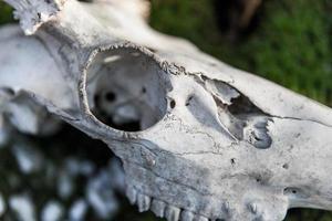 schedel detail