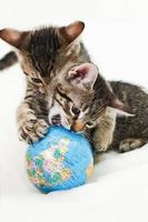 Domestic cats, kitten playing with globe photo