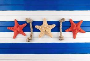 estrellas de mar. foto