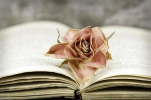 rose and book photo