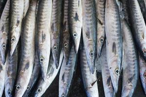 background of natural sea fish mackerel photo