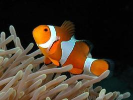 At home with Nemo. photo