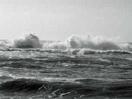 Wild Sea photo