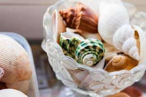 Colorful sea shells photo