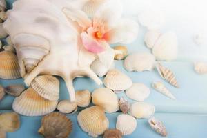 conchas do mar no fundo azul de madeira.