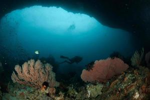 Diver, sea fan in Ambon, Maluku, Indonesia underwater