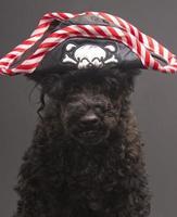 haariger Pirat