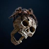 tarántula hondureña de pelo rizado foto