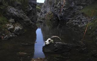 geitenschedel in een vijver