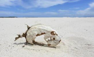 esqueleto de peixe com escamas preservadas