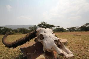 cráneo en el rango