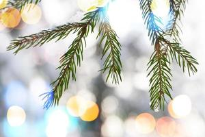 Fir tree branches with snow and colorful lights bokeh