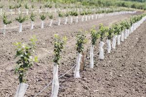saplings photo