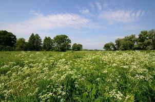 Flowering grassy landscape photo
