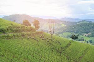 bela vista da montanha verde na estação das chuvas foto