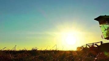 esquiladores de cosecha de trigo al atardecer hora dorada video