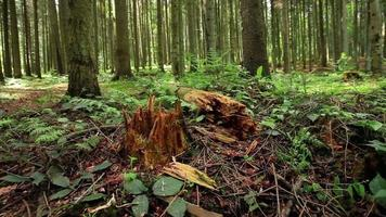 árvore quebrada na floresta