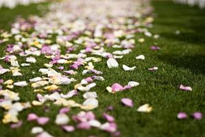 Colorful wedding rose petals