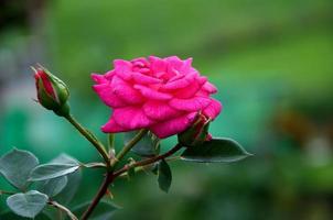 Blume, Textfreiraum, Natur, Bestäubung photo